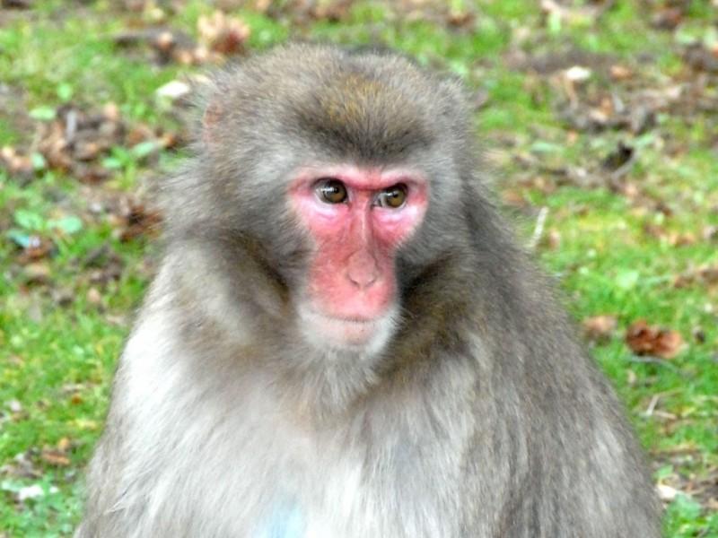 Den Affen ganz nah