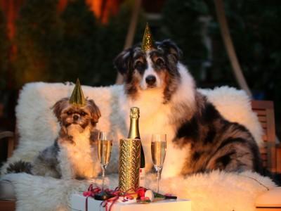 Neujahrsattraktion mit Hund